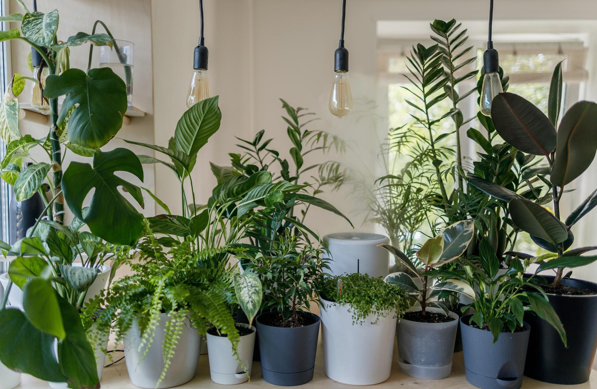 piante-da-interno:-quali-scegliere-e-dove-posizionarle-in-base-alla-luce