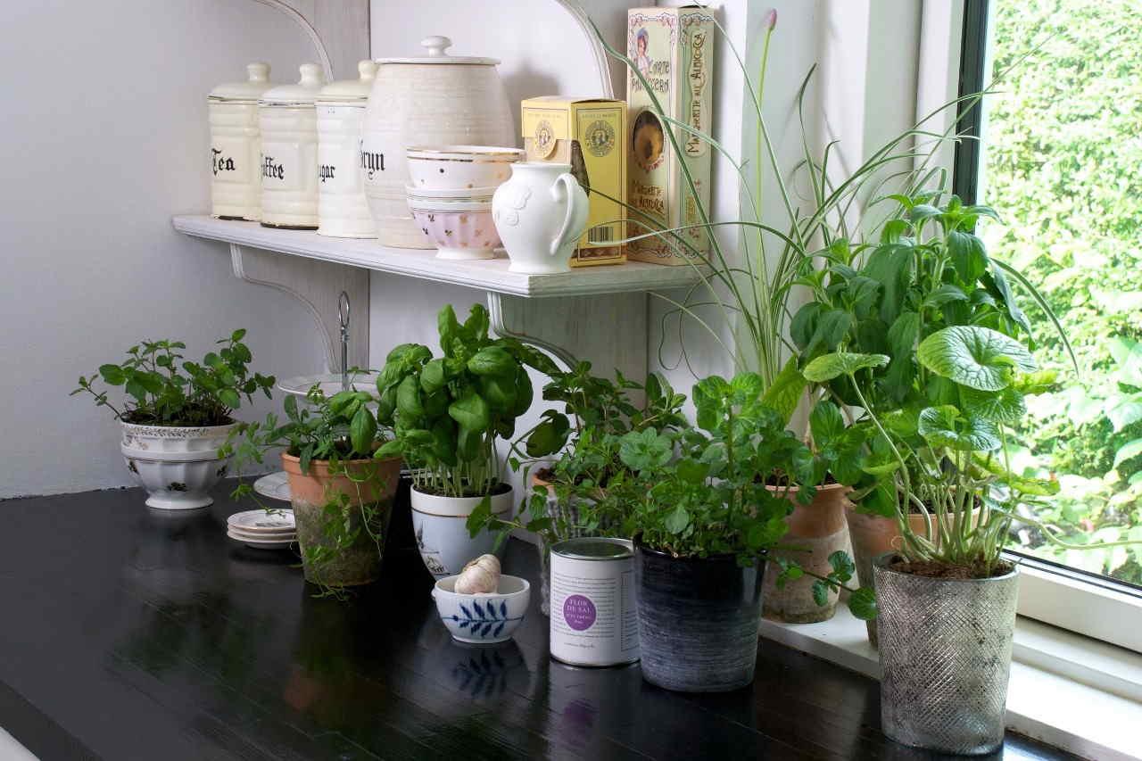 le-10-migliori-erbe-aromatiche-che-non-possono-mancare-nella-tua-cucina-e-i-modi-piu-giusti-per-abbinarle