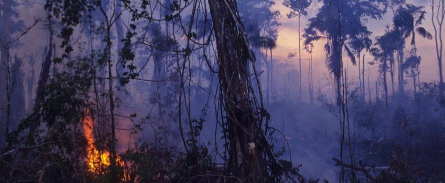 in-10-anni-l'amazzonia-ha-prodotto-piu-anidride-carbonica-di-quanta-ne-abbia-assorbita