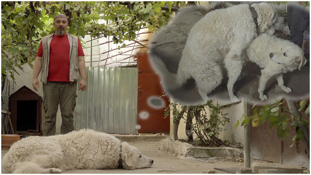 hungarian-romanian-doc-'whose-dog-am-i?'-attempts-new-breed-of-social-satire-(exclusive)