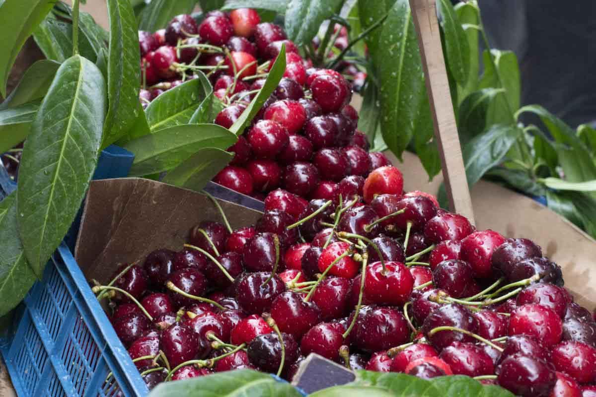 l'invasione-delle-ciliegie-turche-sul-mercato-italiano