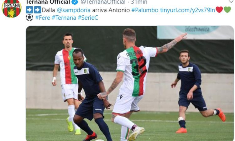 sampdoria,-ufficiale:-la-ternana-ha-riscattato-palumbo