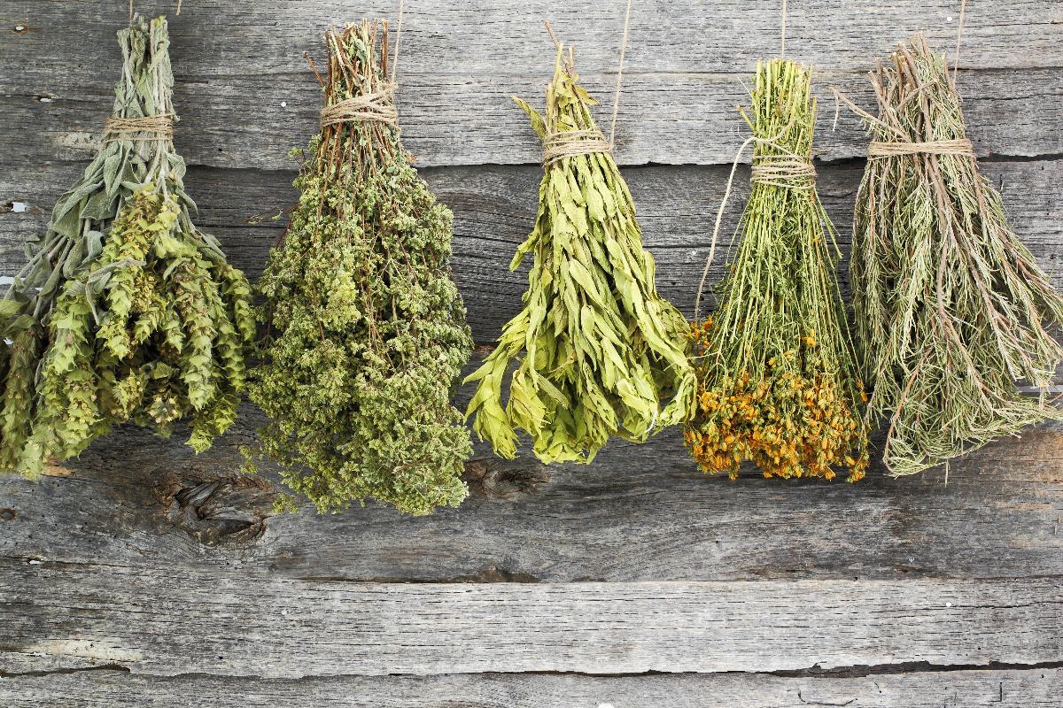 come-essiccare-le-erbe-aromatiche-per-fare-scorta-e-averle-a-disposizione-gratis-tutto-l'anno