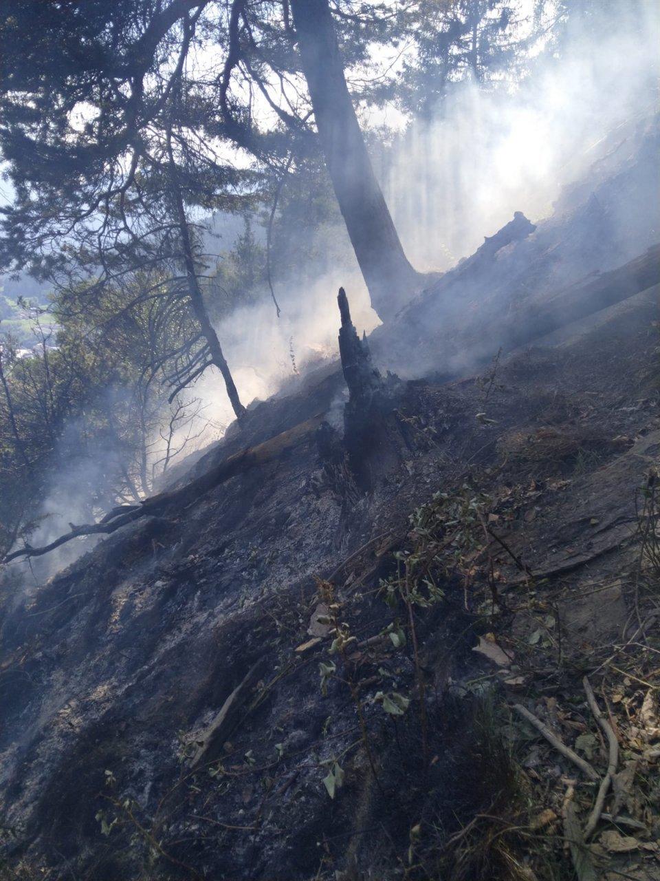 rogo-in-un-bosco,-sessanta-pompieri-lo-domano