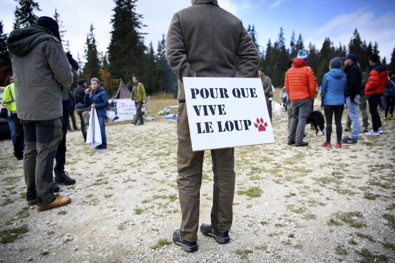cittadini-che-difendono-il-lupo:-«il-fucile-non-e-la-soluzione»