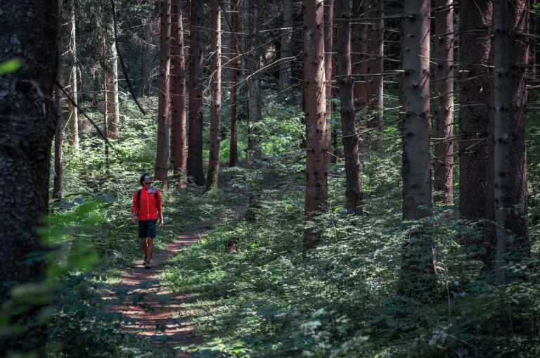 dal-forest-bathing-nelle-dolomiti-alla-maratona-di-new-york:-5-travel-experience-da-provare-in-autunno