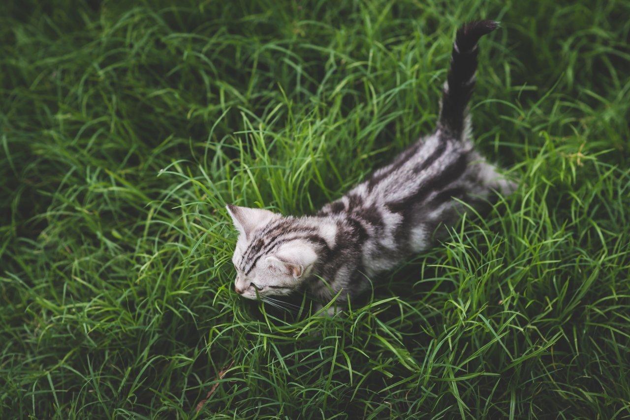 gatto-disabile,-ma-puo-essere-tenuto-libero
